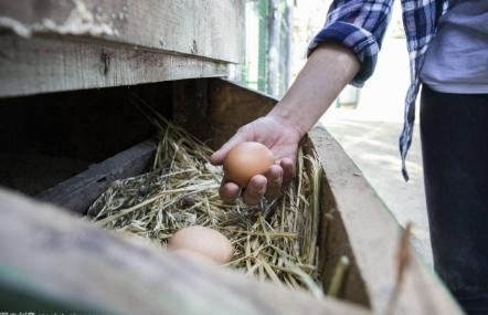 养殖业什么最赚钱农村?过来人分享暴利养殖业农村致富项目